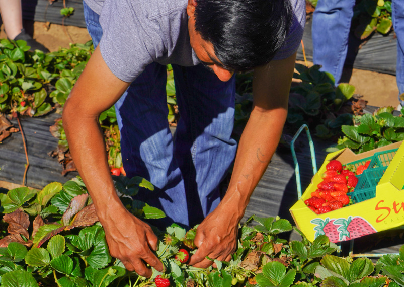 Center for Farmworker Families